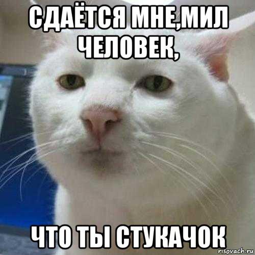 kot_156177429_orig_.jpg
